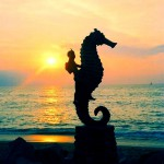 5 Not to Be Missed Activities in Puerto Vallarta