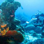 Diving in Cabo San Lucas