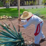 Tequila, Jalisco – The Birthplace of Tequila